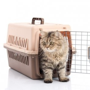 Carriers & Travel Accessories